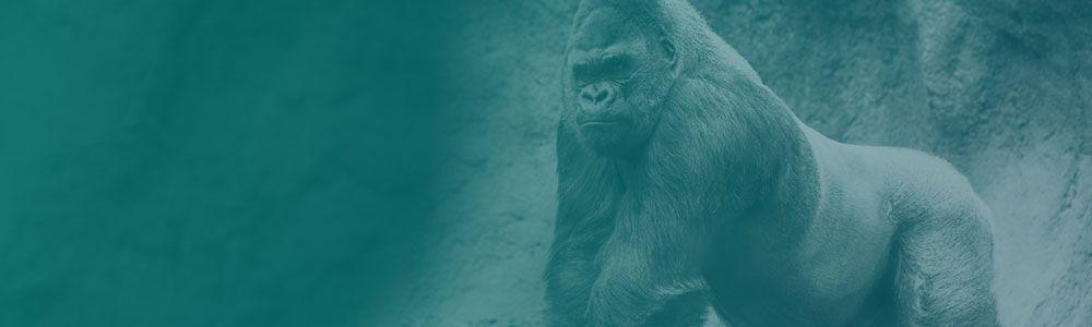 Cylance_Blog_MQ_Gorillas.jpg