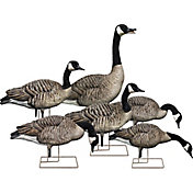 Avian-X Fusion Honker Decoys - 6 Pack