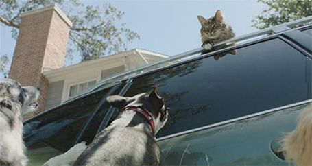 Cat on top of SUV with dogs barking on ground below