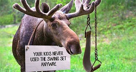 Wild moose with pet shaming sign for destroying backyard swing set