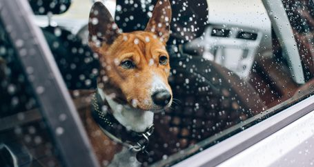 Dog looking out car window in rainstorm