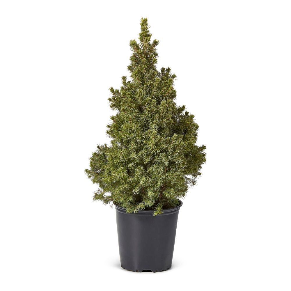 Christmas Trees | The Home Depot Canada