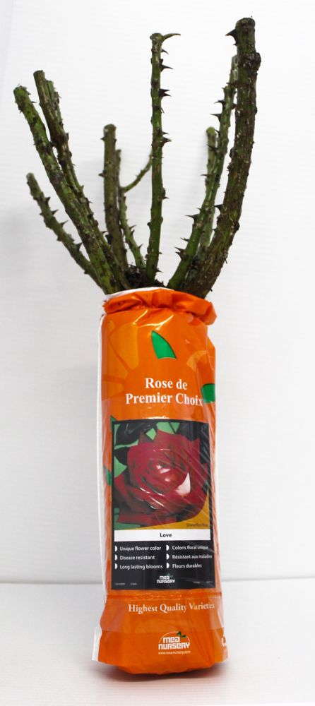 #1 Grade Packaged Rose