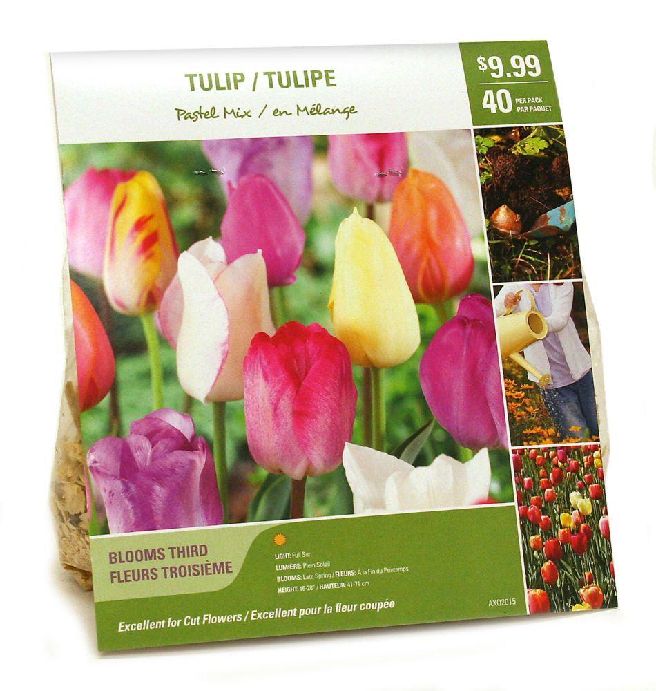 Tulipe en Mélange