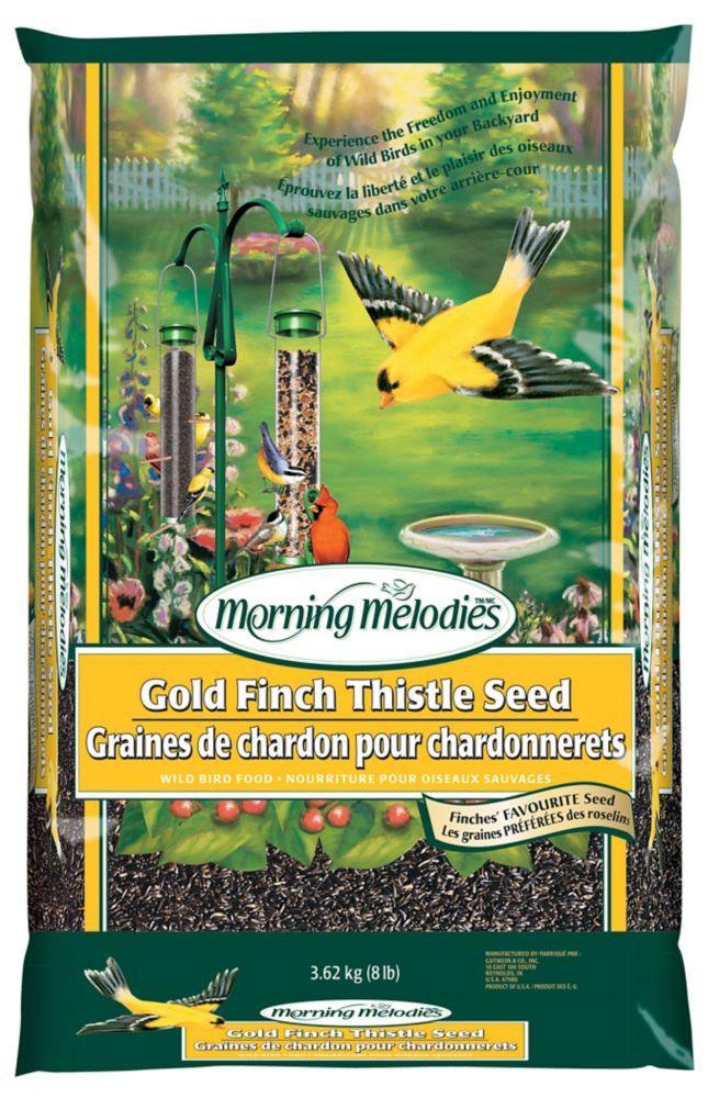 Morning Melodies  Graines de chardon
