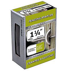 Paulin Agrafe de clôture de 1 1/4 po galvanisée par électrolyse - 420 g (environ 80 pièces par paquet)