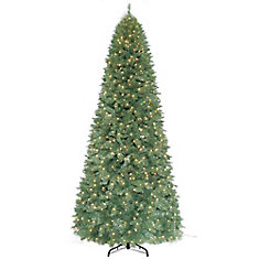 12 ft. 1100 Light Frasier Fir Pine Tree