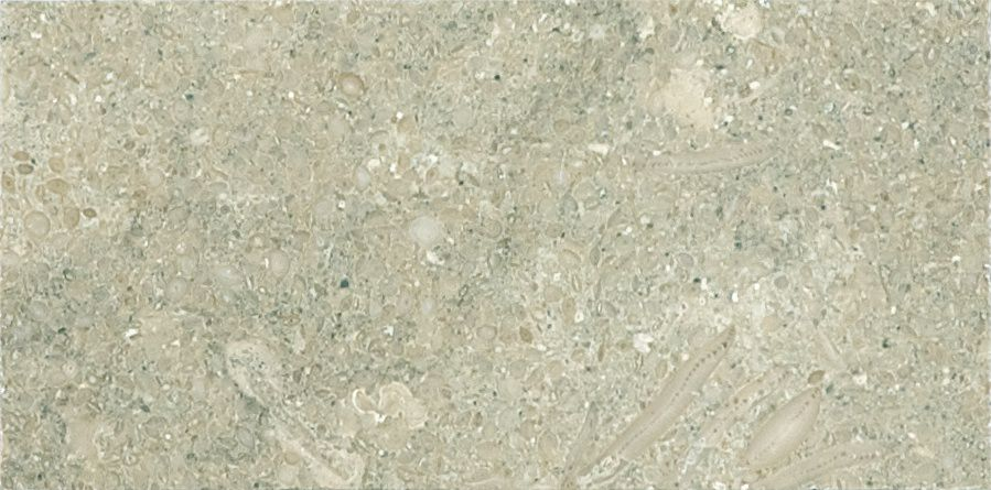 3-Inch x 6-Inch Honed Limestone Tile in Seagrass