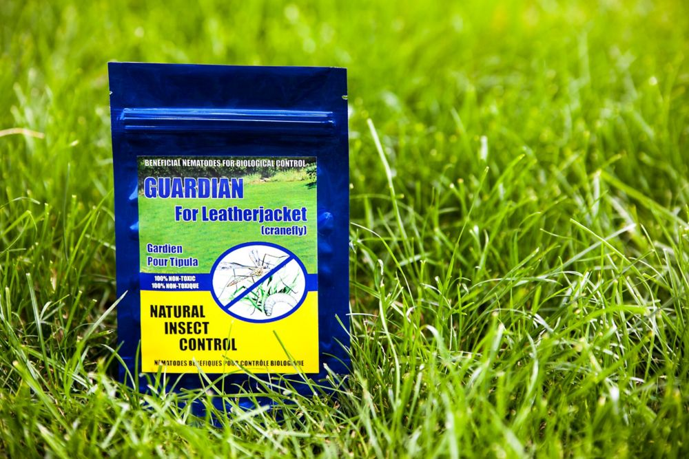Natural Insect Control - Guardian For Leatherjacket (Cranefly)