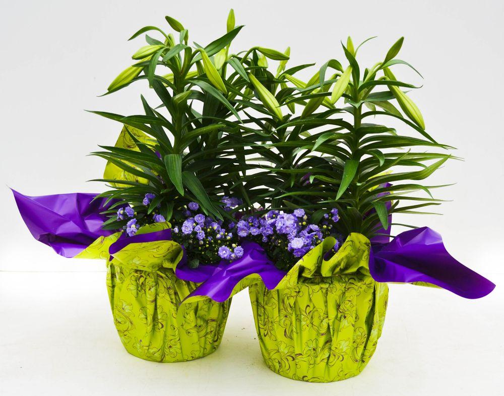 indoor plants the home depot canada. Black Bedroom Furniture Sets. Home Design Ideas