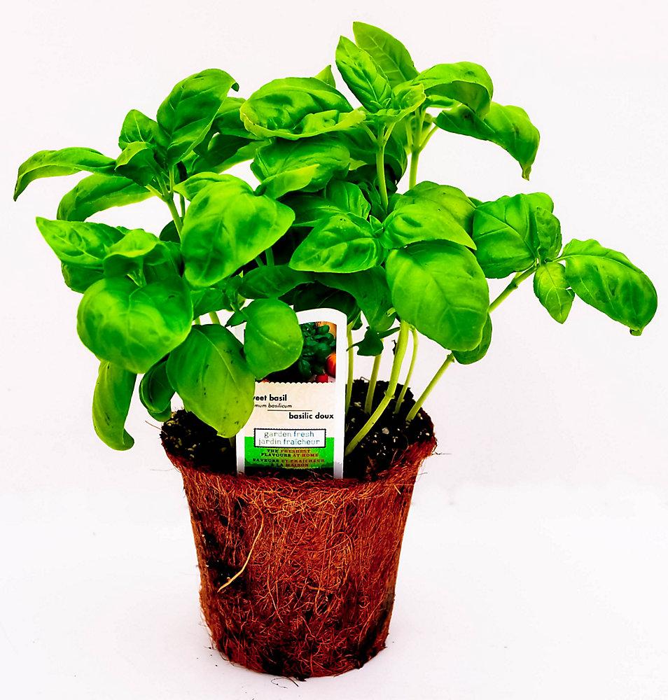 4-inch Eco Basic Herb