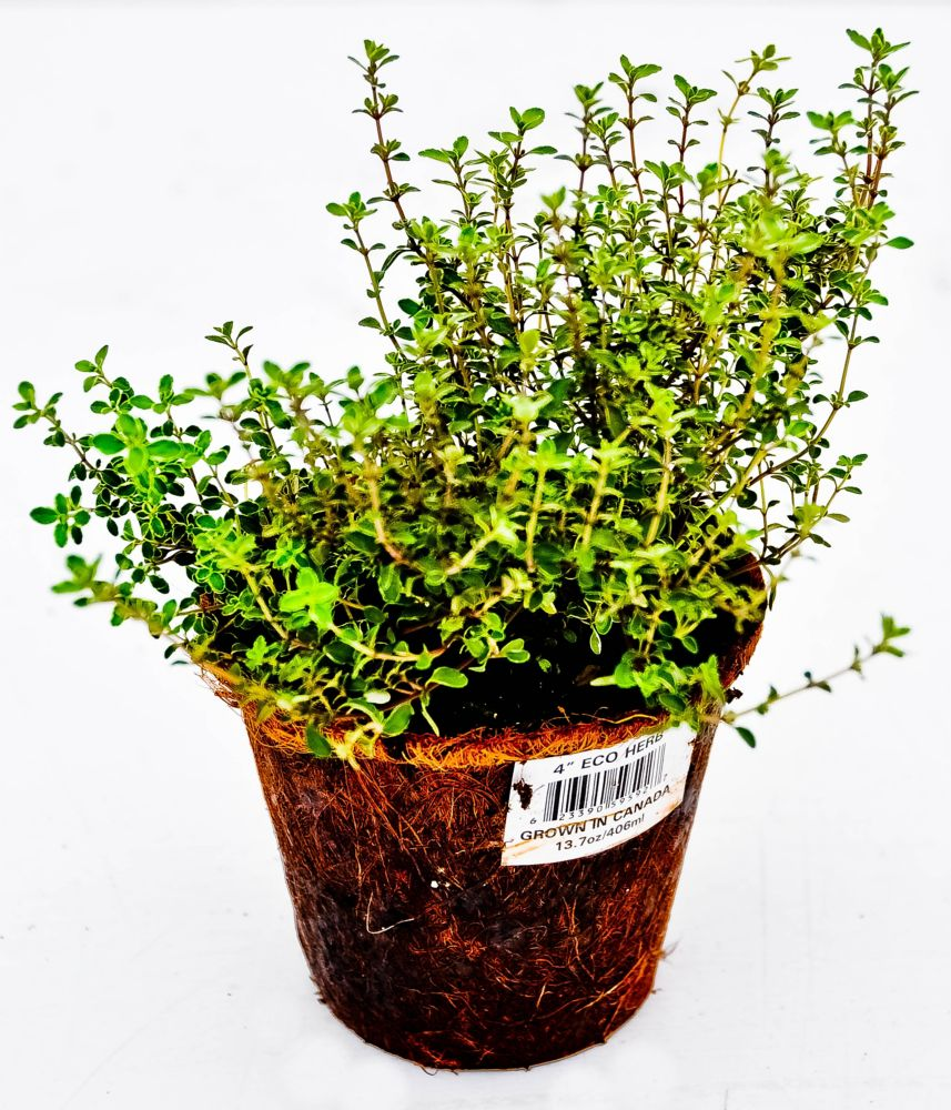 Eco Specialty Herb - 4 Inch