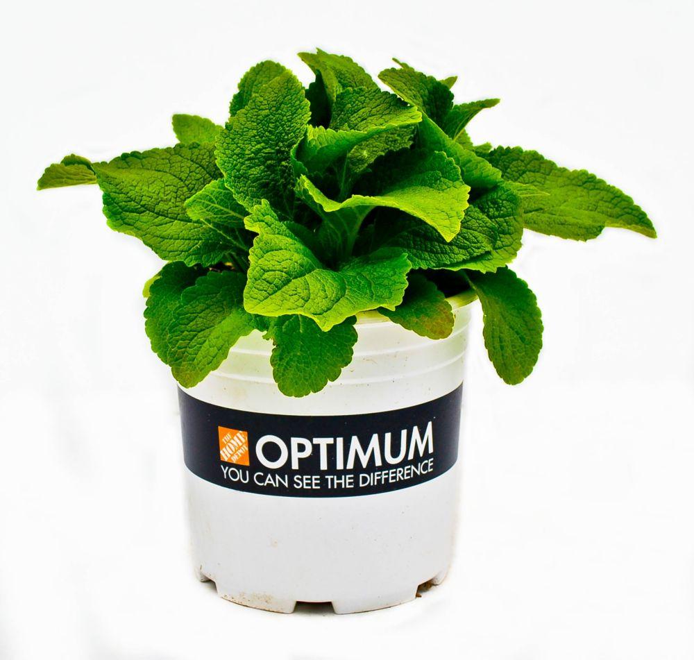 Optimum Perennial - 2 Gallon