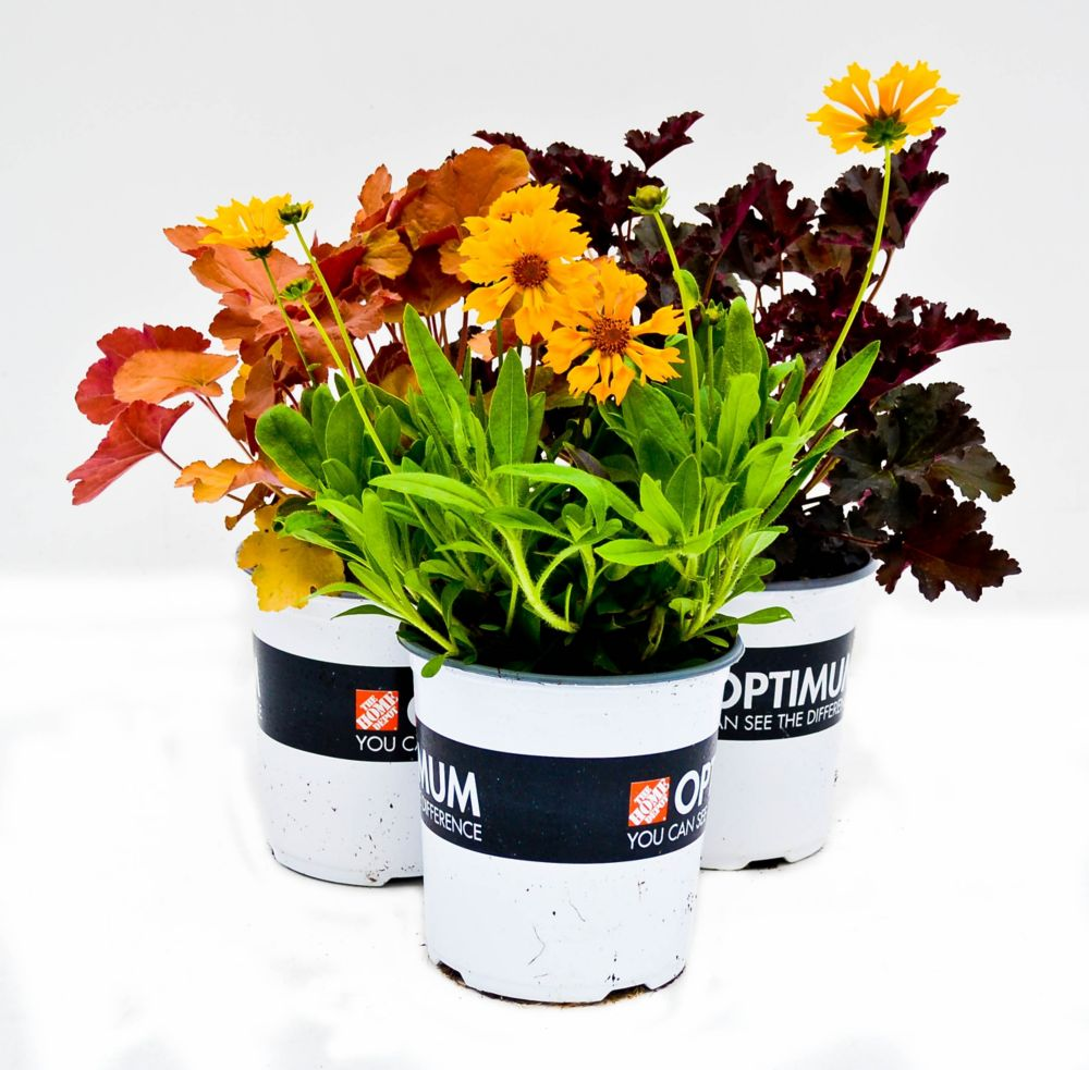 Optimum Perennial - 1 Quart