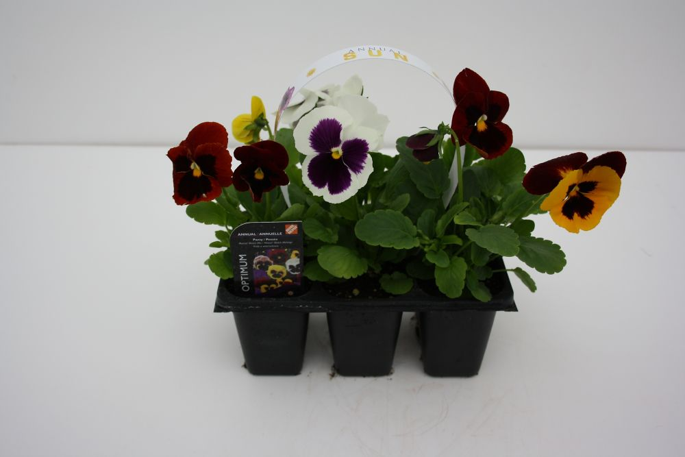 Hanging Flower Baskets Home Depot Canada : The home depot live goods pack annuals