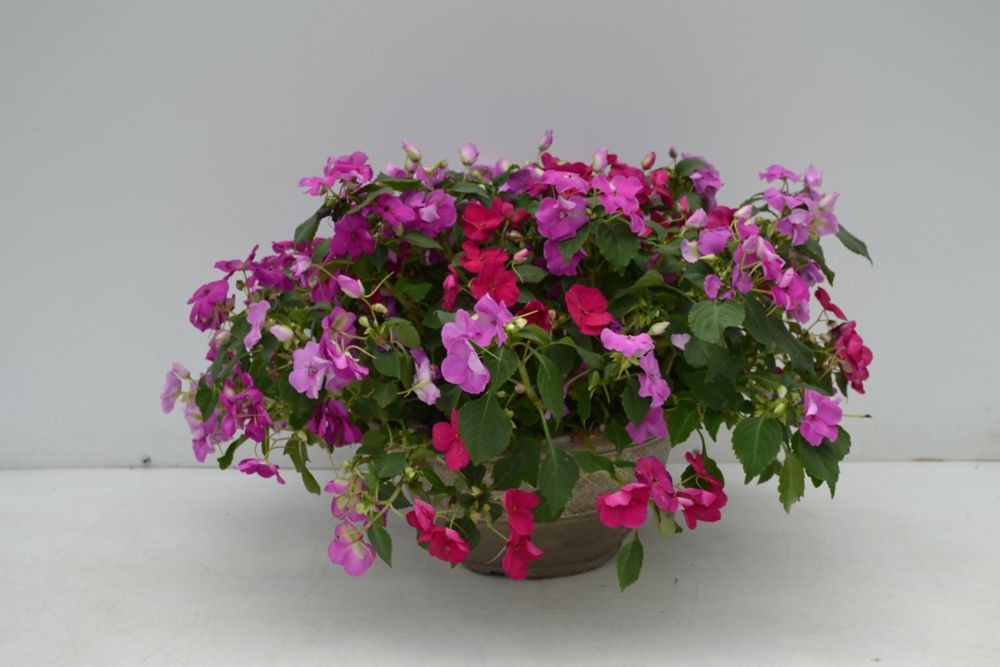 Spring Bowl - 12 Inch