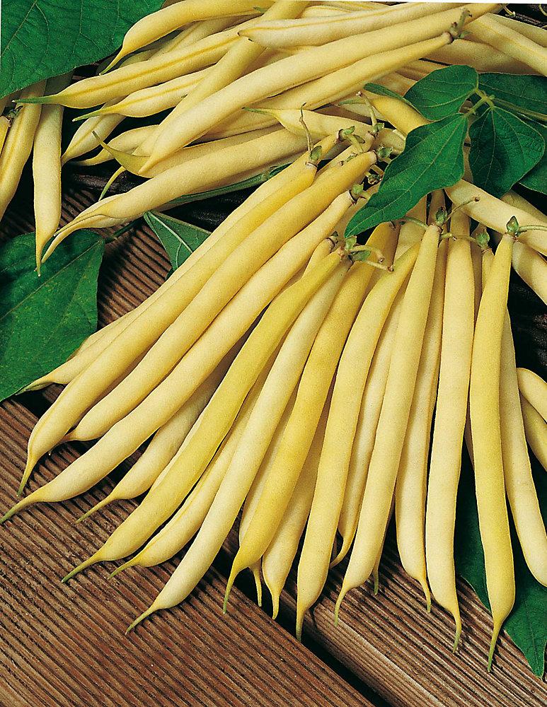 Bean Bush Round Pod Kidney Wax Seeds