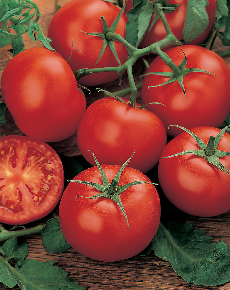 Tomato Moneymaker Seeds