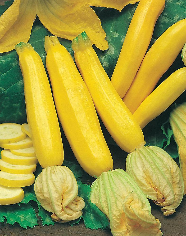 Yellow Zucchini Seeds
