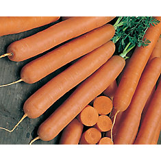 Carrot Early Nantes 2 Vegetable Seed