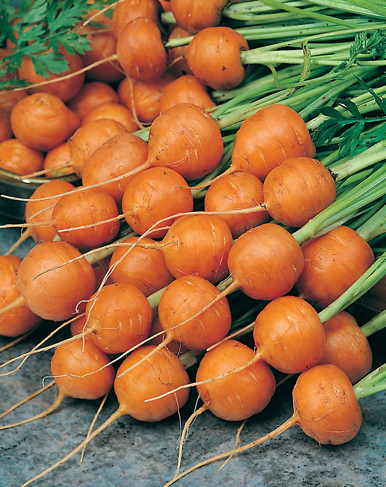 Carrot Parmex Seeds