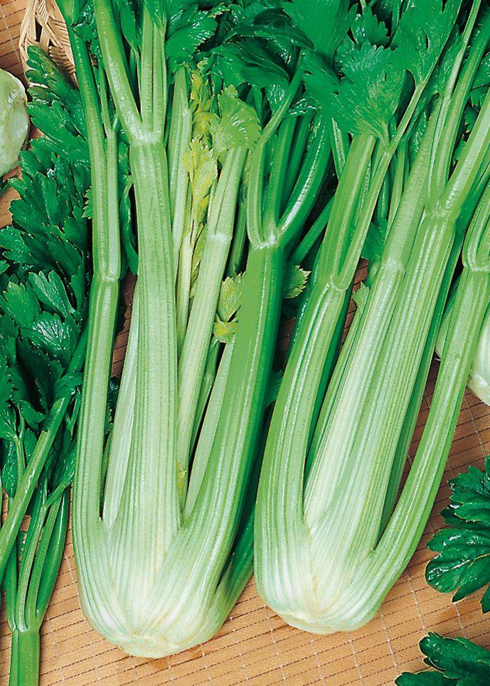 Celery Green Utah 4656 Canada Discount