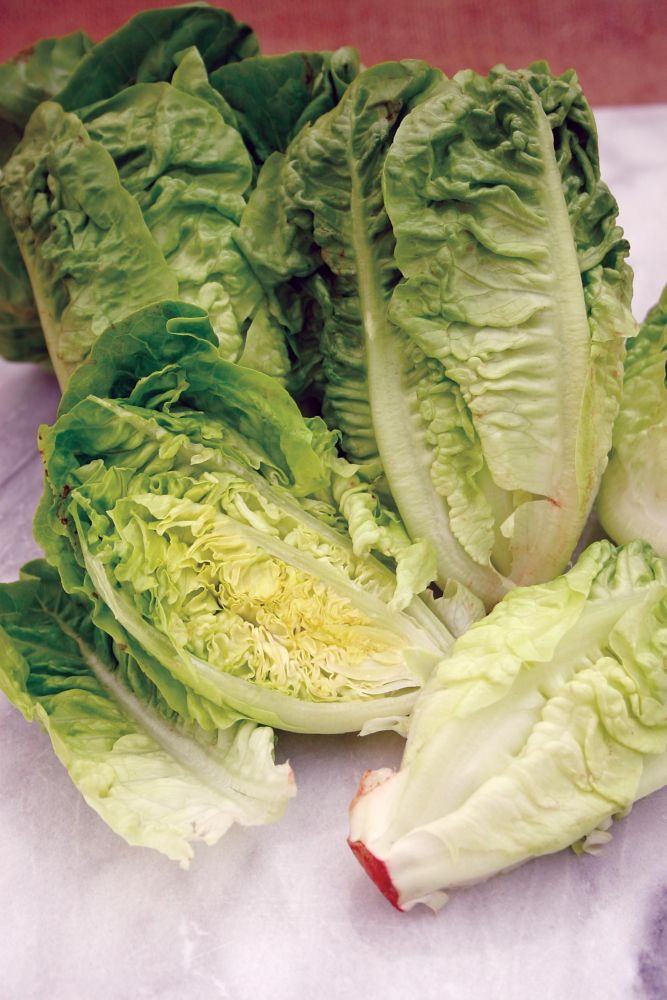 Lettuce Little Gem 238 Canada Discount