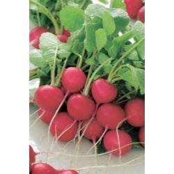Mr. Fothergill's Seeds Radish Cherry Belle Seed Tape