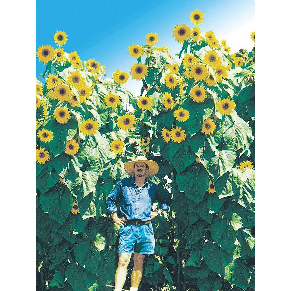 Mr. Fothergill's Seeds Sunflower Kong Seeds