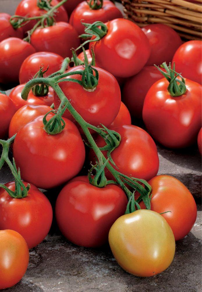 Tomate tomosa