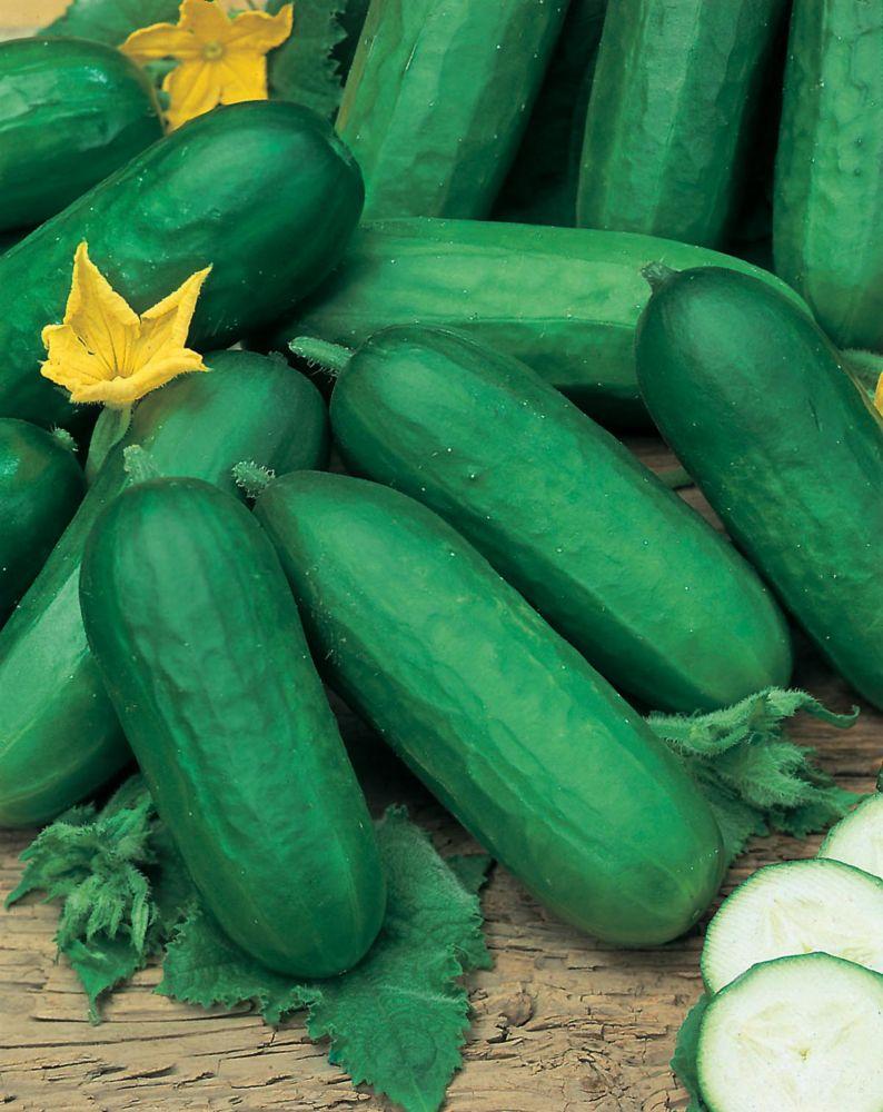Cucumber Biet Alpha F1 743 in Canada