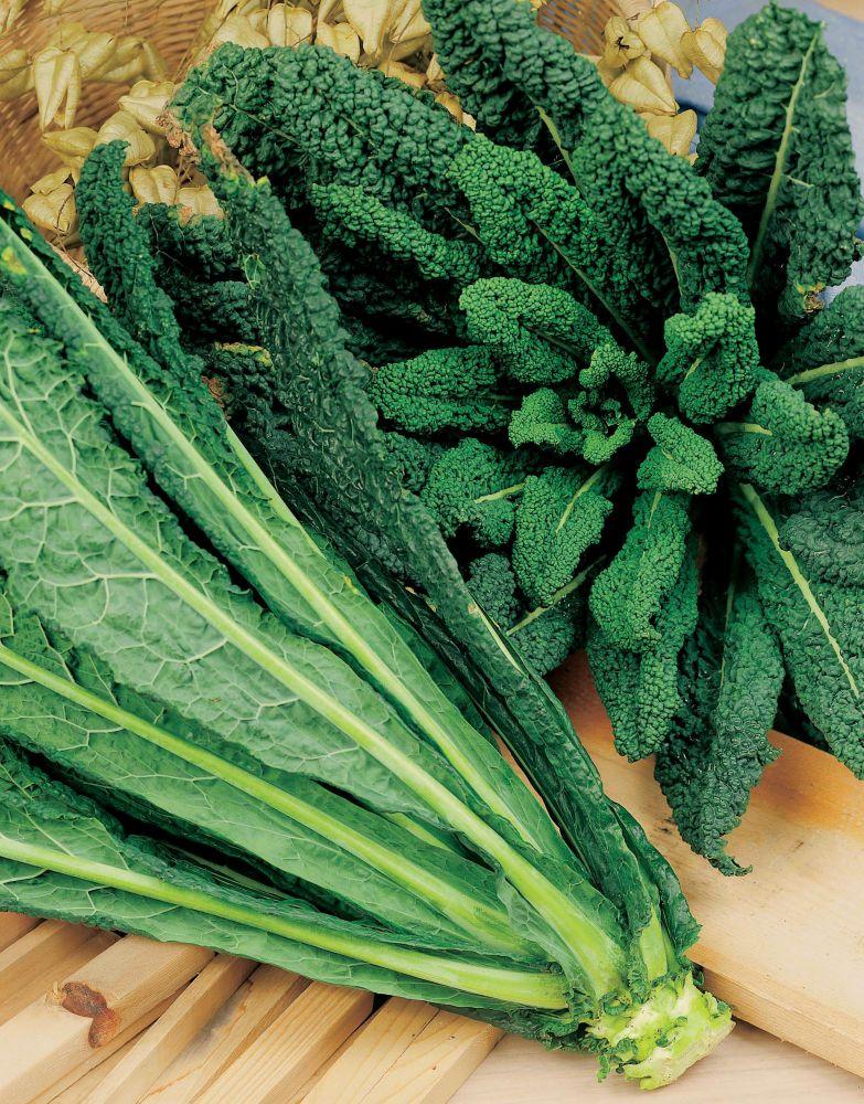 Mr. Fothergill's Seeds Kale Nero Di Toscana Seeds