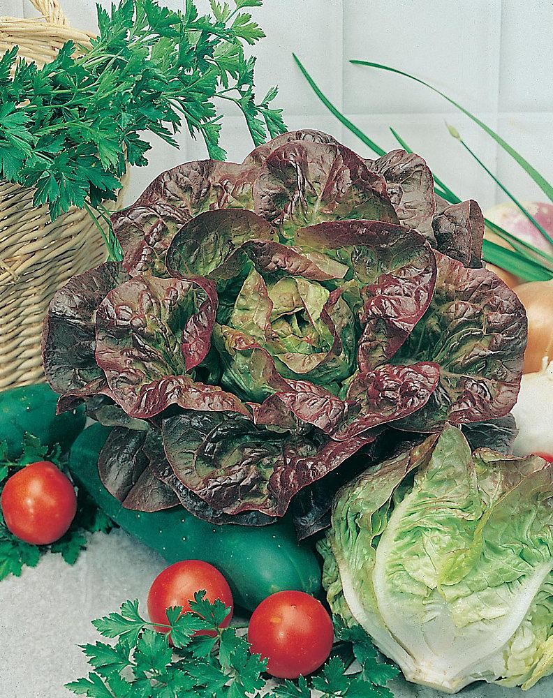 Lettuce Mdqs Seeds
