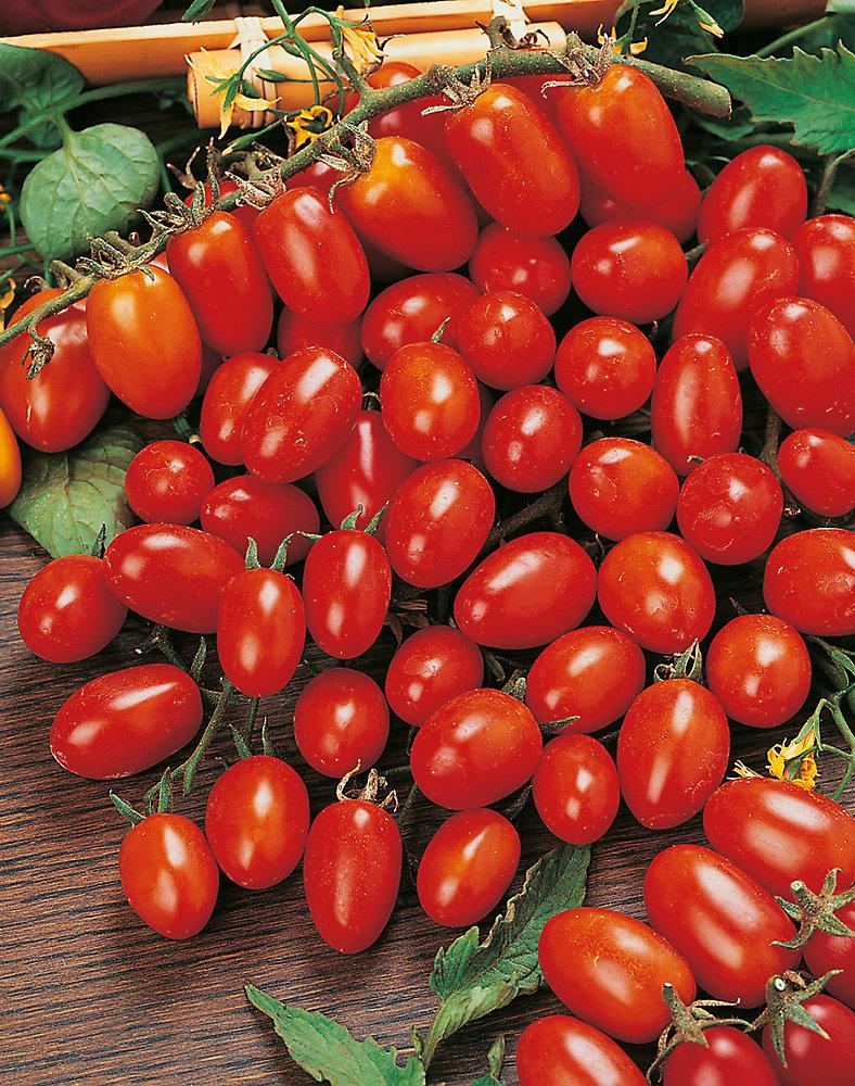 Tomato Principe Borghese Seeds