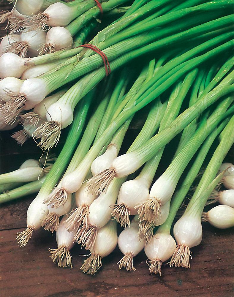 Onion Spring White Lisbon Seeds