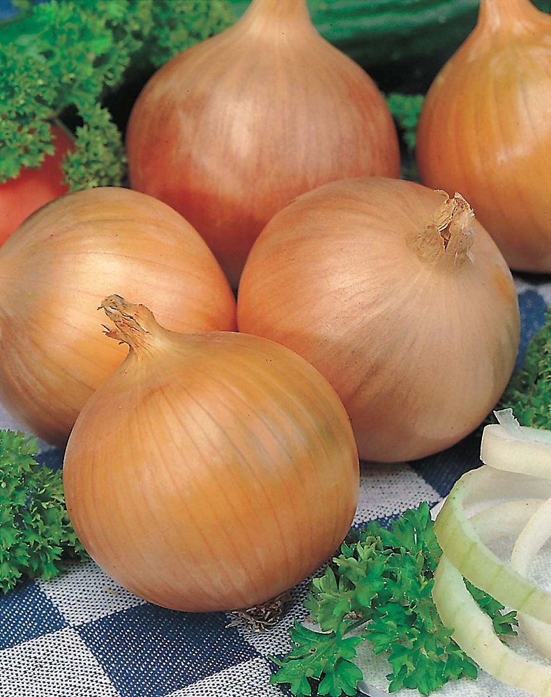 Onion Sweet Spanish Seeds
