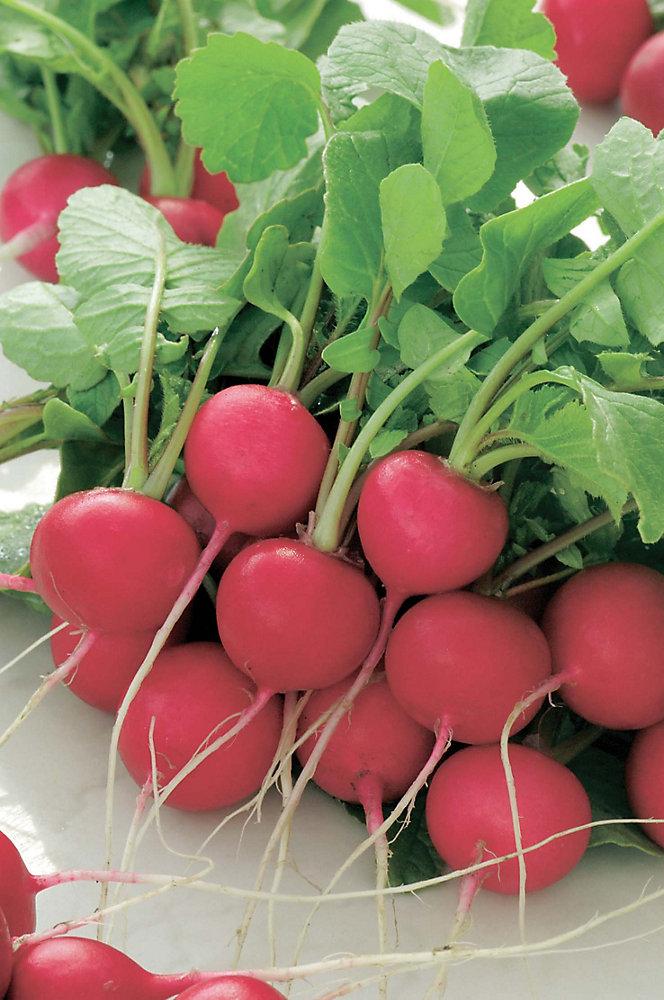 Radish Cherry Belle Seed