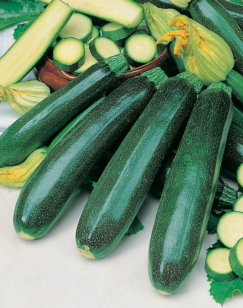 Squash Zucchini Dark Green Seeds