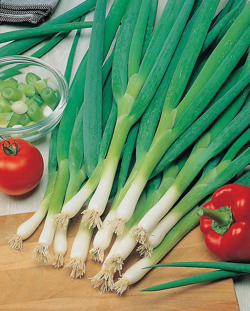 Onion Spring Slim Seeds