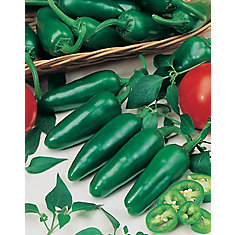 Pepper Jalapeno Seeds