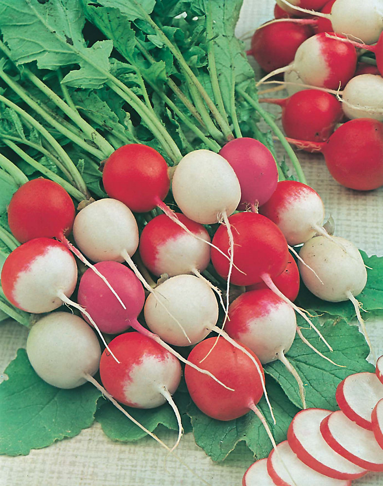 Radish Summer Mix Seeds
