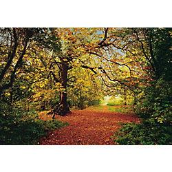 Komar 12 Feet 9 Inches x 8 Feet 10 Inches Autumn Forest Wall Mural