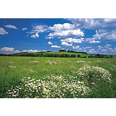 12 Feet 1 Inches X 8 Feet 4 Inches Meadow Wall Mural Part 25