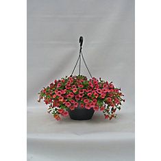 Hanging Basket 11 Inch