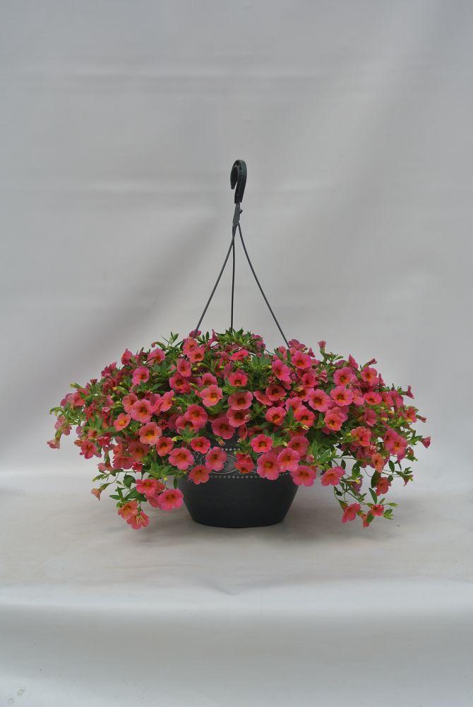 Hanging Basket 11 Inch