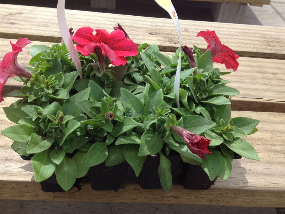 Gardener Dozen