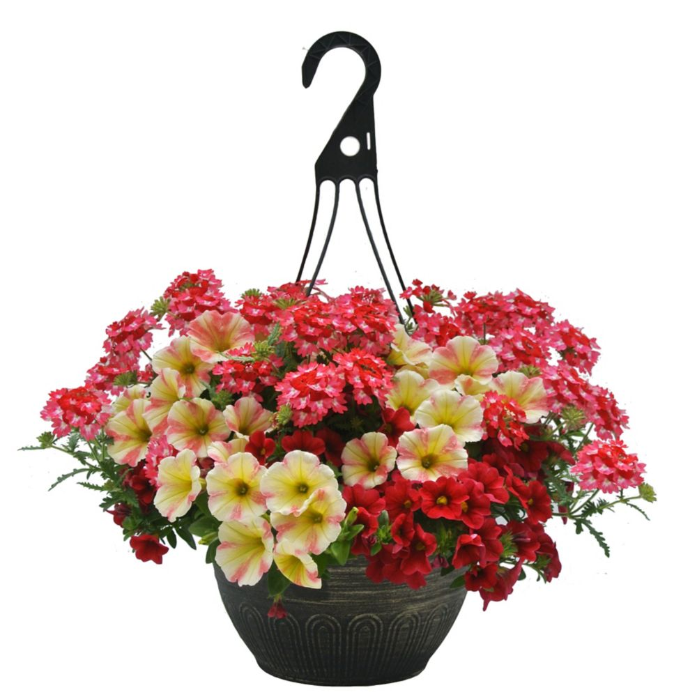 12-inch Hanging Basket