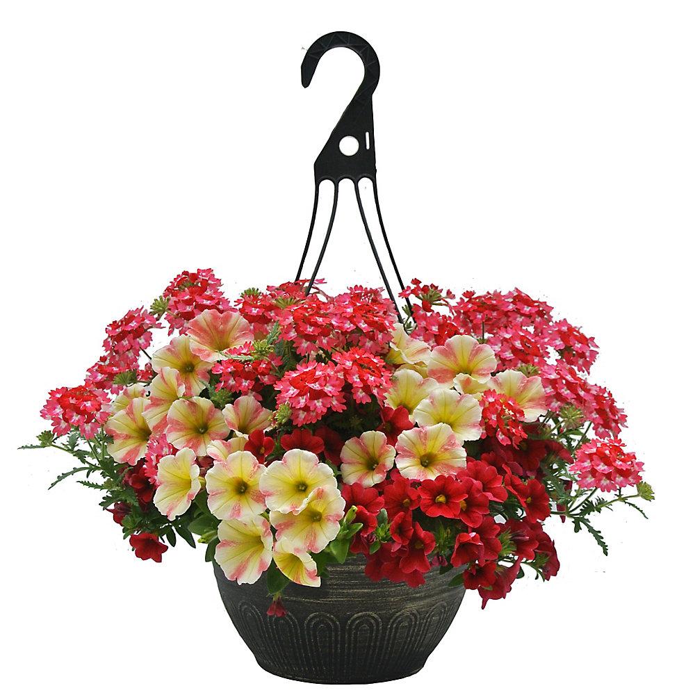 12-inch Hanging Basket