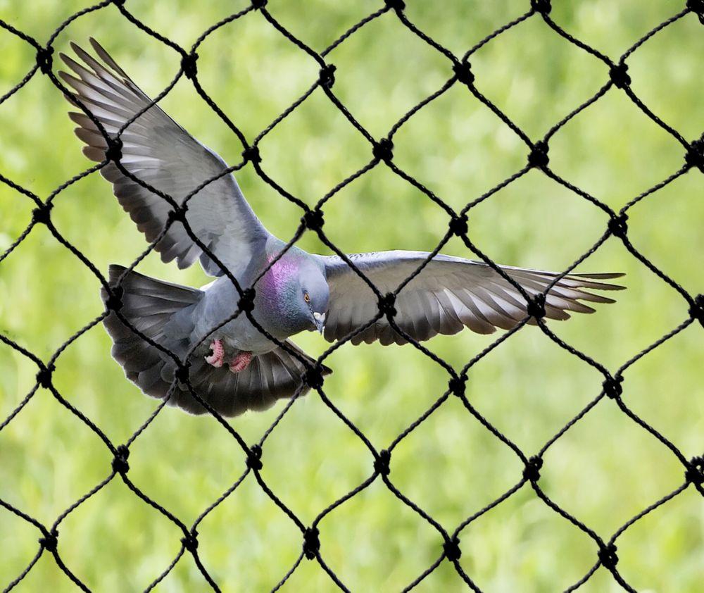 Filet attrape-oiseaux robuste 25 ft. x 50 ft. Bird-X