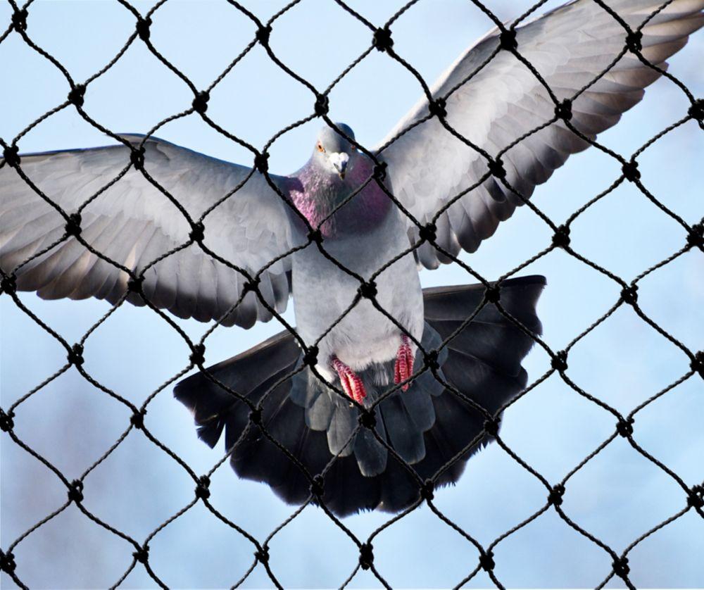 Filet attrape-oiseaux robuste 50 ft. x 100 ft. Bird-X